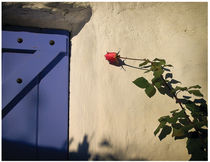 Spanish Rose and Door by gilesy