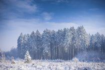 Gefrorener Wald von Björn Kindler