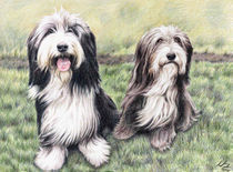 Bearded Collies by Nicole Zeug