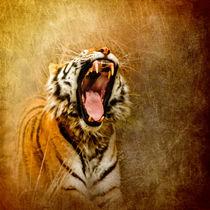Ara0693-hear-me-roar
