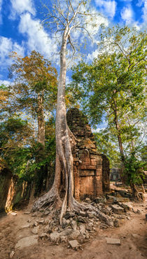 Ta Prohm Temple at Angkor Wat complex, Siem Reap, Cambodia by perfectlazybones