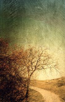 dünenlandschaft by Vera Kämpfe