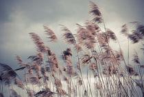 Wind bewegt von hannahw