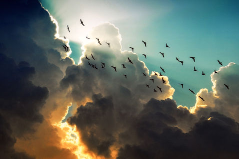 Birds-and-cloud-n