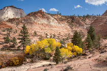 Pretty Yellow Leaves At Zion by John Bailey