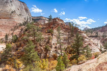 Bright Fall Colors At Zion von John Bailey