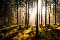 Das Licht Erwartend von Andreas Wonisch
