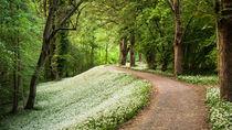 Frühlingsteppich von Andreas Wonisch