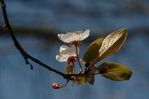 Blütenzeit von Marion Eckhardt