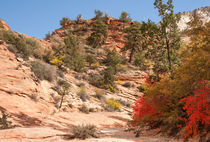 Fall Colors At Zion National Park by John Bailey