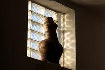 Dralles Mädchen im Fenster by Reiner Poser