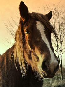 Braunes Pferd von leddermann
