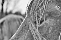 Das Auge des Pferdes by leddermann