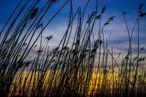 Sonnenuntergang im Schilff von Dennis Stracke