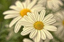 soft flowers - sanfte Blumen von leddermann