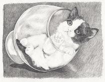 Kitten-in-a-glass