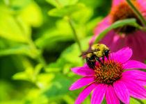 Memphis-botanic-garden-quest-for-butterflies-145-raw-5x7-sfe-l-and-e