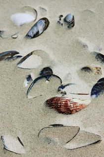 shells in the sand by meleah