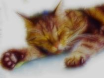 Sleeping cat by Ken Unger