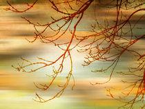 Evening Breeze. by Heather Goodwin
