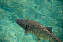 Der Fisch by Christian Lange
