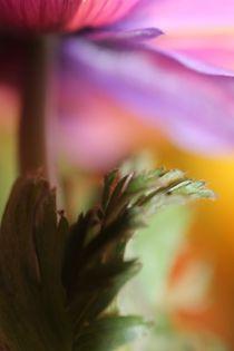 'LINDA' von © Ivonne Wentzler