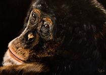 Schimpanse by Conny Krakowski