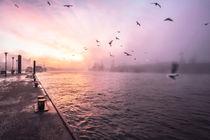 31-fischmarkt-morgens-nebel