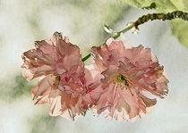 Japanische Blühkirsche by Karin Dietzel