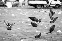 Pigeons of Florence by Harrison Newman Jardine