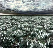 Spring Field von florin