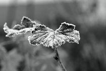 Kalte Zeiten - cold times von leddermann