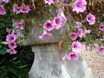 Blumen in einem englischen Garten by framboise