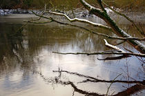 Melting Snow On Branches Over Rolleston Pond by Rod Johnson