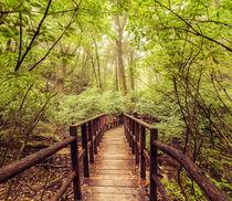 Wooden bridge at tropical rain forest. Doi Inthanon Park, Thailand von perfectlazybones
