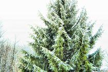 Winter Tree von Dan Richards