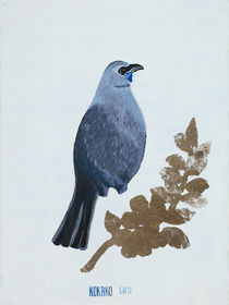 Kokako by Guy Harkness