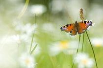 Butterfly von Tobiasz Stefaniak
