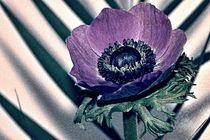 blumig - flowery von leddermann