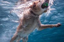 UnderwaterDogs by Tierfoto-NRW von Magnus Pomm