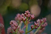 Blütenmeer - mehr Blüten von leddermann