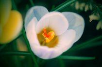 Blütenspiel von leddermann