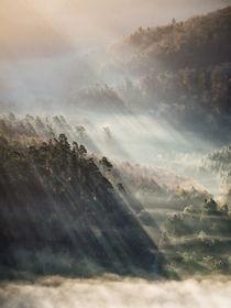 Licht im Wald by Andreas Wonisch