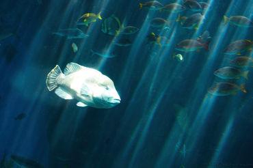 Ocean-school-of-fish