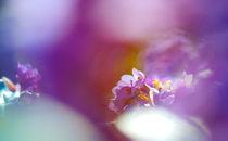 Fruehlingsblume von berit  behrens