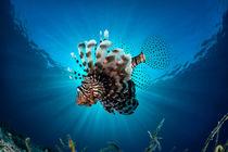 Unterwasser-15