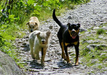 Happy three dogs von Tudor Buzle