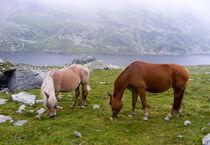 Horses above 2000m by Tudor Buzle