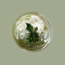 White flower blossom in globe von Robert Gipson