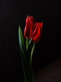 tulip von emanuele molinari